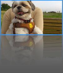 Fotowall--オールフリーソフト