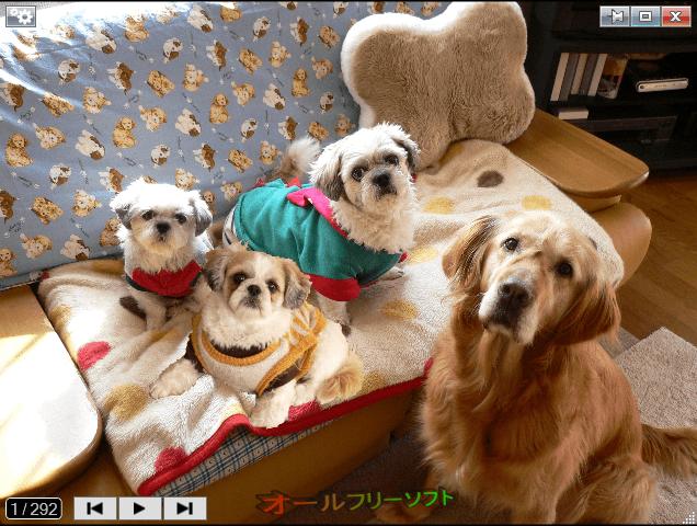 Photo Browser--ビューアウインドウ--オールフリーソフト