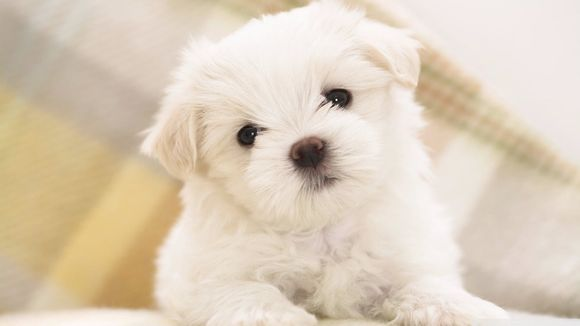 Cute Dogs & Puppies Wallpapers HD New Tab--新しいタブ--オールフリーソフト